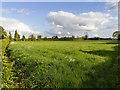 TM1782 : Fields south of Harvey Lane by David P Howard