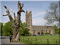 ST6390 : St Mary's and the tree by Neil Owen