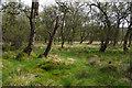 SD8867 : Tarn Moss, Malham by Ian Taylor