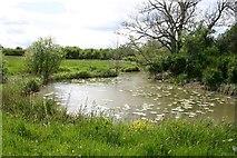TQ0524 : An Arun Backwater by Peter Jeffery