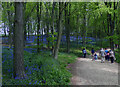 SK9108 : Bluebells in Barnsdale Wood by Mat Fascione