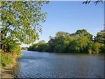 TQ0866 : The Thames at Lower Halliford by Stefan Czapski