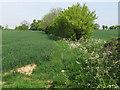 TL7944 : Footpath along arable field boundary, Pentlow by Roger Jones
