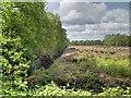 SJ7196 : Peat Field, Chat Moss by David Dixon