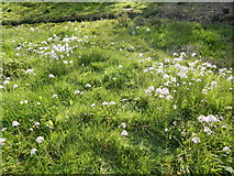 TM1645 : Flowers in open ground North of the pond by Hamish Griffin