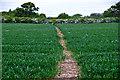 SO8955 : Wychavon : Grassy Field & Path by Lewis Clarke