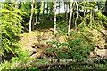 NX0981 : Smyrton Wood by Billy McCrorie