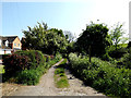 TM4288 : Footpath to Cucumber Lane by Adrian Cable