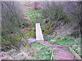 NZ9702 : Board walk across a stream on the Cleveland Way by Humphrey Bolton