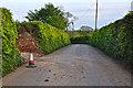 SS8522 : North Devon : Country Lane by Lewis Clarke