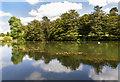 SP5141 : Lake, Thenford Arboretum by David P Howard