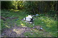 SK5598 : Flytipping in Wadworth Wood by Ian S