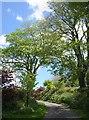 SX3466 : Byway to Amy Tree by Derek Harper