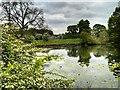 SJ7581 : Mill Pond at Tatton Park by David Dixon