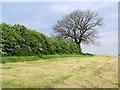 SJ9793 : Freshly cut field by Stephen Burton