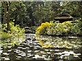 SJ7481 : Golden Brook and the Japanese Garden at Tatton Park by David Dixon