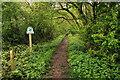 SU2595 : Footpath entrance to Badbury Wood by Rob Noble