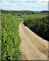 SX3366 : Lane to Crift by Derek Harper
