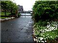 H4572 : Daisies, Dublin Road, Omagh by Kenneth  Allen