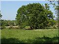 SU9946 : Broadford Meadows by Alan Hunt