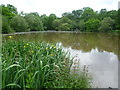 TQ1860 : Stew Pond on Epsom Common by Marathon