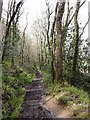 SX2454 : Muddy Woodland Footpath by Tony Atkin