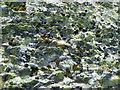 NY5210 : Rock Outcrop, Tongue Rigg by Michael Graham