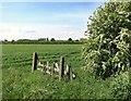 SP7504 : Green Fields by the Phoenix Trail by Des Blenkinsopp