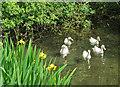 SE6476 : Duck quintet by Pauline E