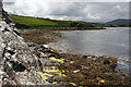 B9233 : Ballyness Bay by Anne Burgess