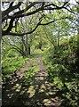 SX7877 : Templer Way above Ullacombe by Derek Harper