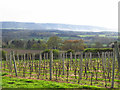SU9522 : Nyetimber Vineyard & the South Downs (Upperton, West Sussex) by SK53