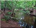 SU9569 : Woodland Stream near Virginia Water by Des Blenkinsopp