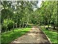 TQ5646 : Road through the Birches by Des Blenkinsopp
