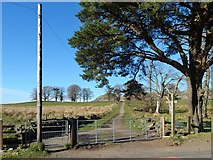 NS5379 : West Highland Way at Easter Carbeth by Lairich Rig