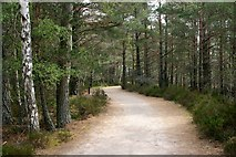 NH9718 : The path to the RSPB's Loch Garten Osprey Centre by Graham Hogg