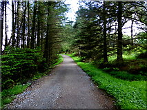 H5776 : Pathway, Loughmacrory by Kenneth  Allen
