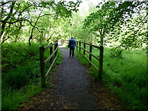 H5776 : Path and footbridge, Loughmacrory by Kenneth  Allen