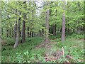 NU1517 : Shipley Wood by Richard Webb