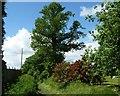 SU0054 : Russell Mill & Strawberry Hill Walk [11] by Christine Johnstone