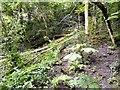 SJ9594 : Tree across the duckboards (4) by Gerald England