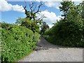SU0155 : Dead tree on a byway, south of Easterton Sands by Christine Johnstone