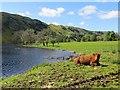 NM8820 : Loch Scammadale by Richard Webb