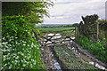 SS8621 : Mid Devon : Grassy Field & Gate by Lewis Clarke