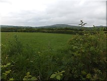 SX6396 : Field by Restland Lane by David Smith