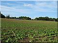 TM0853 : Arable land, near Parkwood House, Barking by Roger Jones