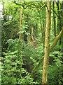 SX7660 : Petoe Quarry by Derek Harper