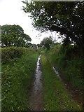 SX6297 : Devonshire Heartland Way near Honeycott by David Smith