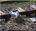 NM6797 : Nest on the track by Ian Taylor