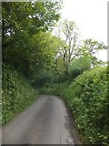 SX6597 : High banks to the road south of Halford by David Smith